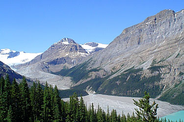 Peyto Glacier. Banff National Park.