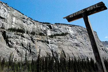 The Weeping Wall. Banff National Park.